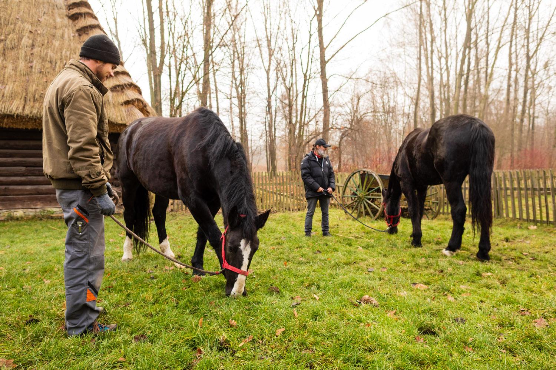 Barcelona i Pirat - konie w skansenie - Chorzów