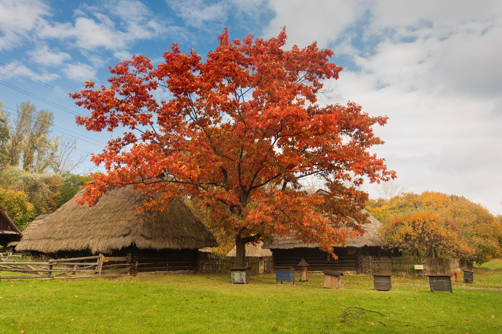 Zagroda z Frydka - skansen Chorzów – Na ratunek drewnu